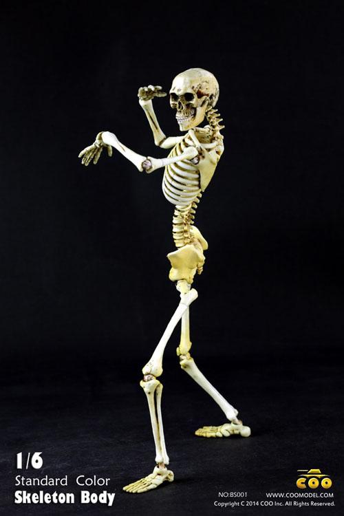 Coo Model - BS001 - 1/6 Skeletal Body Movable (Standard